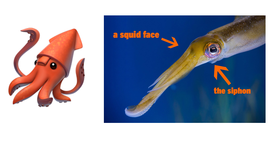 "alt=""Squid"""