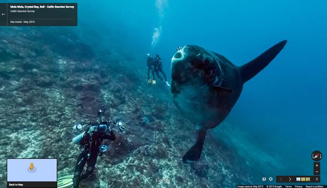 "alt=""Mola mola, the world's heaviest bony fish, in Crystal Bay, Bali"""