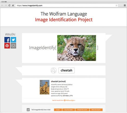 "alt=""Image Identification Project"""