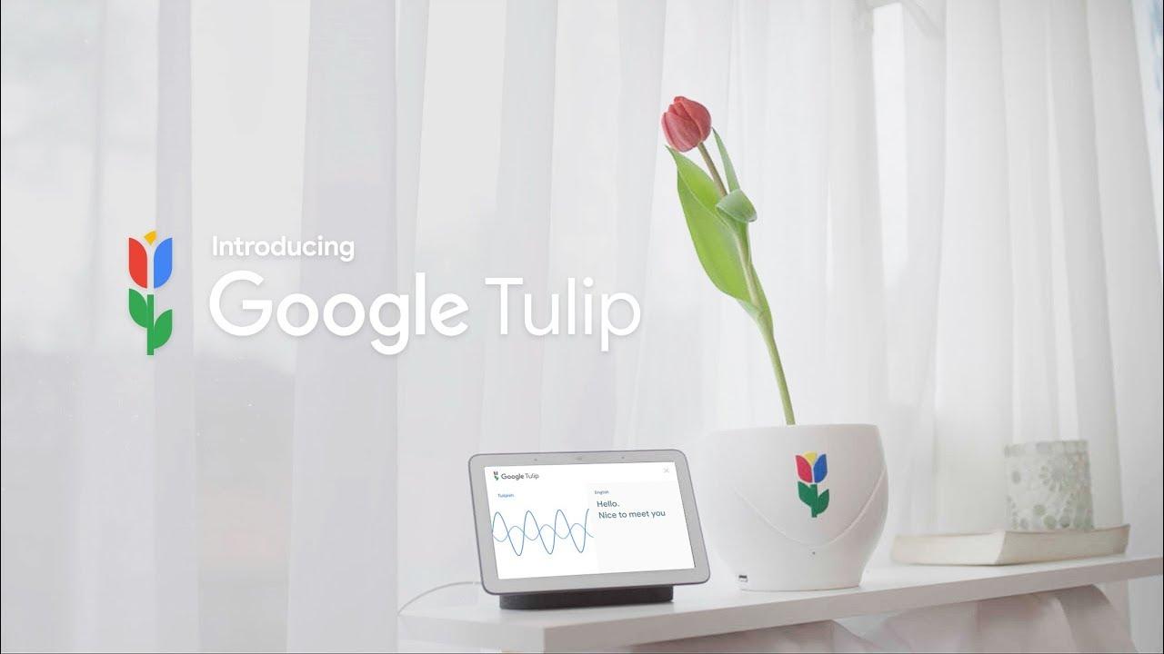 """alt=""""Google Tulip"""""""